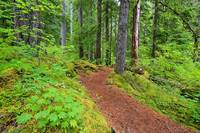 Trail To Proxy Falls In Willamette National Forest