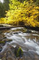 Autumn Colours Along Santiam River In Willamette N