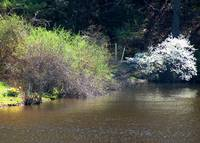 Lower Lake in Spring I by Wendy Ritch
