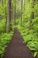 A Trail In Columbia River Gorge National Scenic Ar