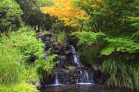 Waterfalls In Crystal Springs Rhododendron Garden,