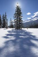 Rampart Flats In Winter, Banff National Park, Albe