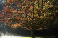 Fall Colors In Muckross Gardens In Killarney Natio