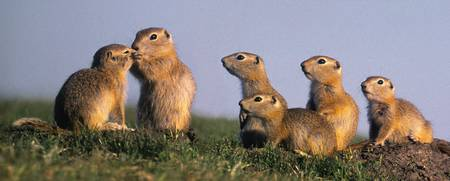 Fv3553, Natural Moments Photography Prairie Dogs