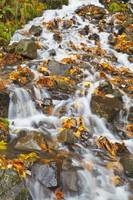 Water Cascading Over Rocks Covered In Leaves In Au