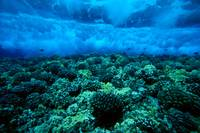 Hawaii, Maui, Molokini Island, Underwater View Of
