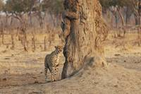 Africa, Zimbabwe, Hwange National Park, On Safari,