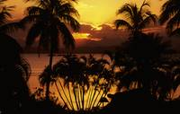 Fiji, Sunset Over Suva Bay, Silhouetted Palm Trees