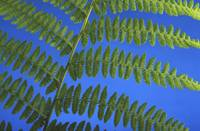 Close-Up Of A Fern