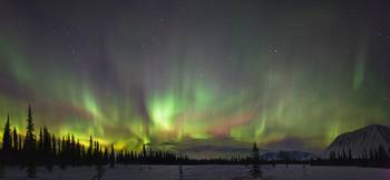 Northern Lights And Spruce Trees In Broad Pass, So