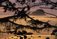 Sunset At Olympic National Park, Cape Alava, Washi