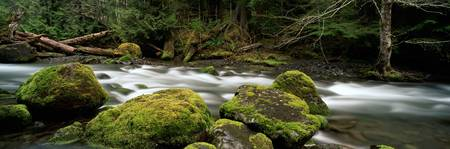 Tunnel Creek, Olympic National Forest, Washington,