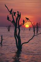Birds On Tree, Lake Kariba At Sunset Zimbabwe