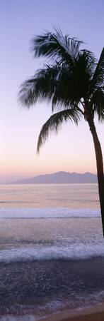 Hawaii, West Maui Beach At Twilight, Palm Tree Alo