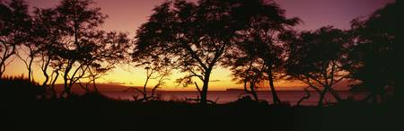 Hawaii, Maui, Trees Silhouetted On West Maui Shore