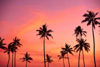 Palm Trees Silhouetted Against Hazy Orange Skies
