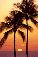 Hawaii, Big Island, Sunset With Coconut Trees On K