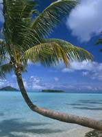 Palm Tree Leaning Over Sea