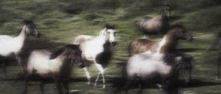 Wild Horses On The Move