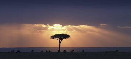 An Acacia Tree And Wildebeest Under A Sunset Keny