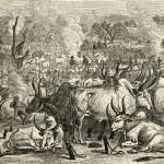 A Dinka Cattle Park, Southern Sudan. G.T. Bettany  Prints & Posters