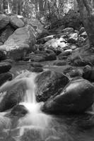 Mountain Stream Monochrome