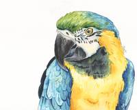 Tango the Silly Spokesbird Macaw