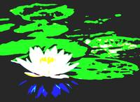 Lotus Flower with Lily Pads