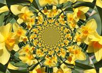 Daffodil Kaleidoscope by Carol Groenen
