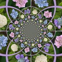 Hydrangea Kaleidoscope by Carol Groenen