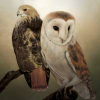 Hawk And Owl Art Prints & Posters by Nick Ryan