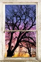Colorful Tree White Farm House Window View