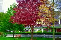 Bench Under Red Maple by Kirt Tisdale