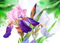 Green background with white blue  irises