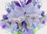 Blue background with two white  irises