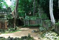 Ruins of the TaProhm temple in Cambodia