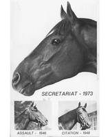 Vintage Horse Racing Head Shots Secretariat