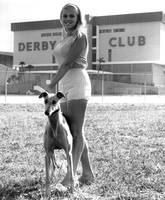 Pretty girl with greyhound