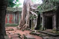 Tree roots overgrowing buildings in the Ta Prohm t