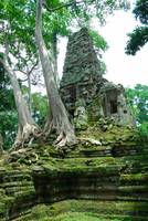 Trees in Angkor Wat Cambodia