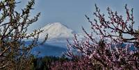 Mt. Adams in Spring