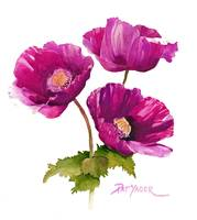 Purple Poppies, for RB, clnr, lrgr, deeper