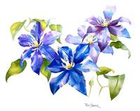 Purple Clematis Painting, Resized   for Wet Canvas