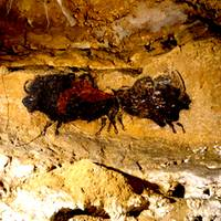 2 Buffalo Lascaux Cave SE France
