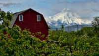 The Red Barn and Mt. Hood