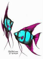 AngelFish-blue-pink