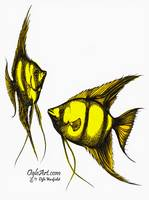 AngelFish-yellow-orange