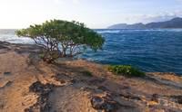 Tree By The Sea by David Kocherhans