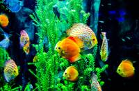 salt water fish in the ocean or aquarium