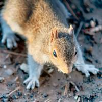 squirrel posing for camera by Alexandr Grichenko